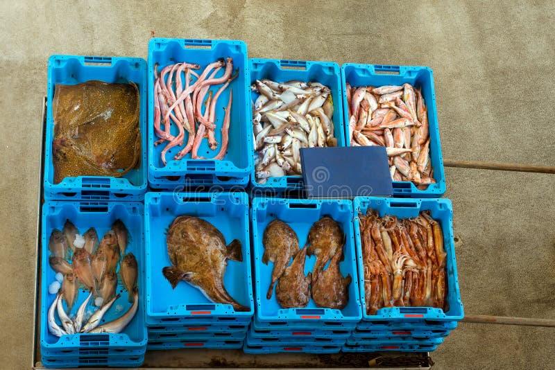 Εμπορευματοκιβώτια με τη σύλληψη, λιχουδιές ψαριών θάλασσας, Ισπανία στοκ εικόνες