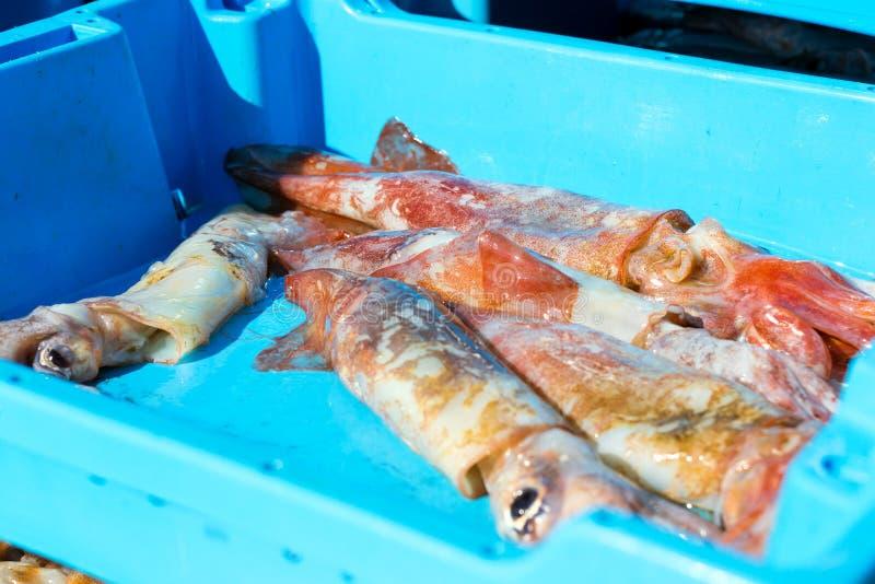 Εμπορευματοκιβώτιο με τις λιχουδιές θάλασσας καλαμαριών σύλληψης, Blanes στοκ φωτογραφία με δικαίωμα ελεύθερης χρήσης