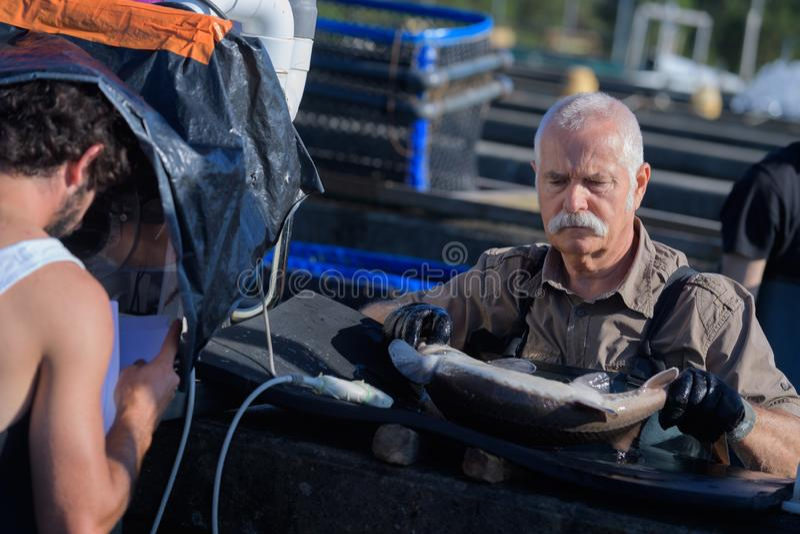 Εμπορικά ψάρια εκμετάλλευσης ψαράδων στοκ εικόνες