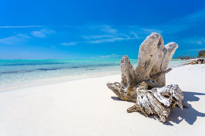 Εμπλοκή στην τροπική παραλία στοκ φωτογραφίες