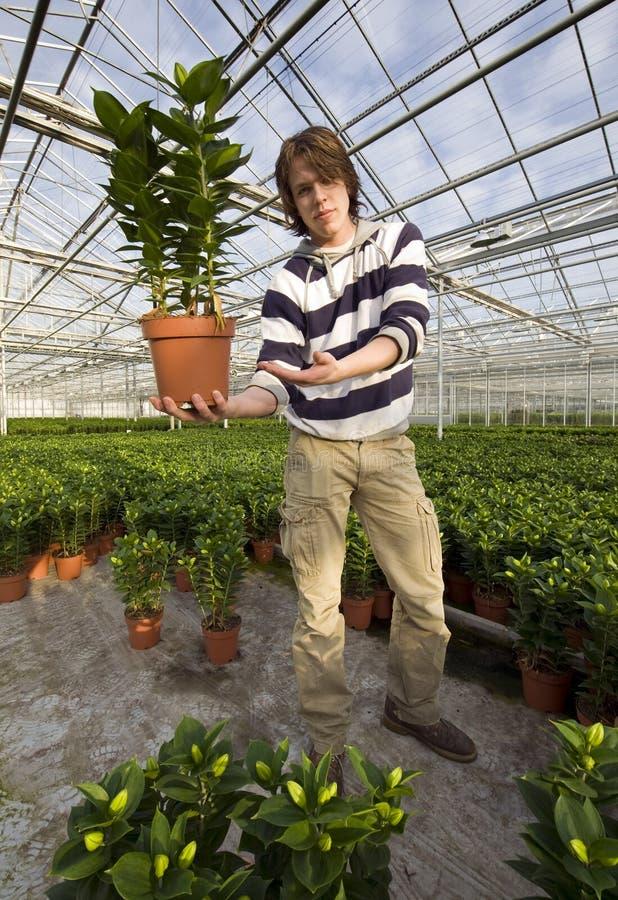 Download Εμφάνιση ενός φυτού στοκ εικόνα. εικόνα από προστασία - 13188481