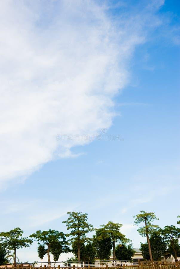ενάντια στα δέντρα μπλε ο&upsilon στοκ εικόνες