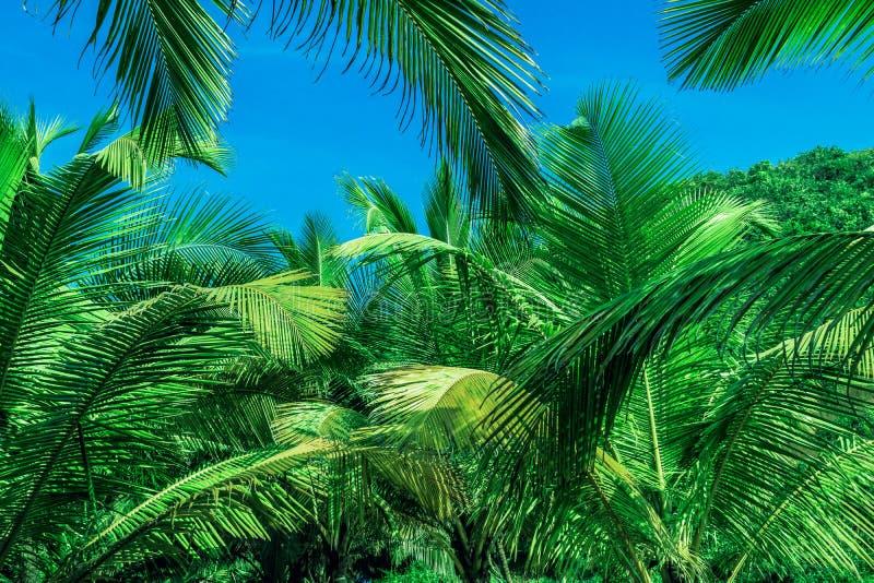 ενάντια στα μπλε δέντρα ο&upsilo στοκ φωτογραφίες με δικαίωμα ελεύθερης χρήσης