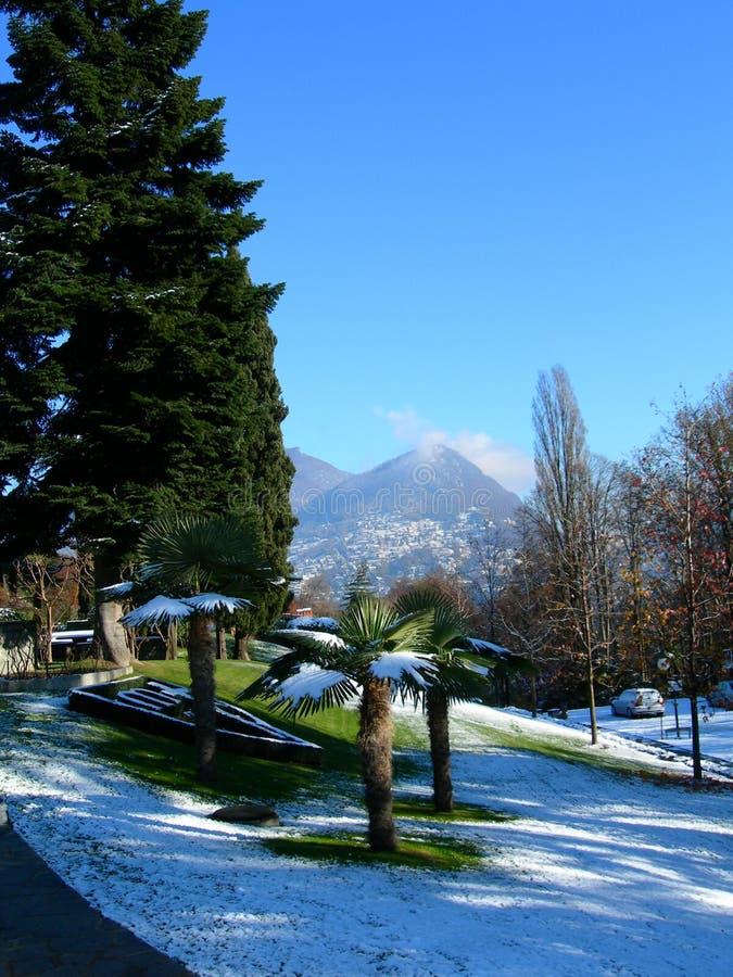 ενάντια στα μπλε σαφή δέντρ&alp στοκ φωτογραφίες