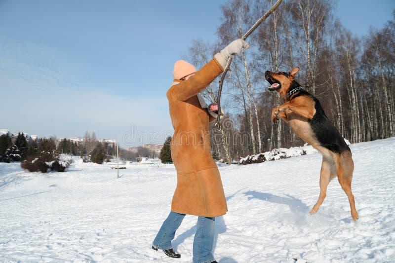 ενάντια στον μπλε σκυλιώ&nu στοκ φωτογραφία με δικαίωμα ελεύθερης χρήσης
