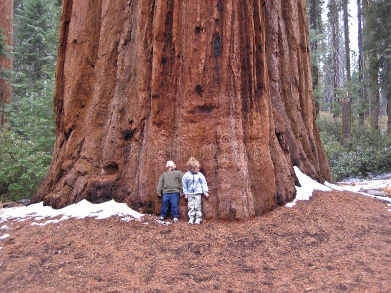 ενάντια sequoia παιδιών στο δέντρ&omic στοκ φωτογραφία