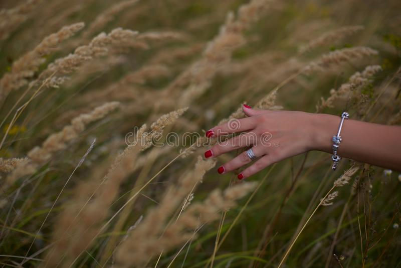 ενάντια spikelets συγκομιδών χεριών πεδίων έννοιας ανασκόπησης στην ώριμη γυναίκα σίτου στοκ φωτογραφία με δικαίωμα ελεύθερης χρήσης