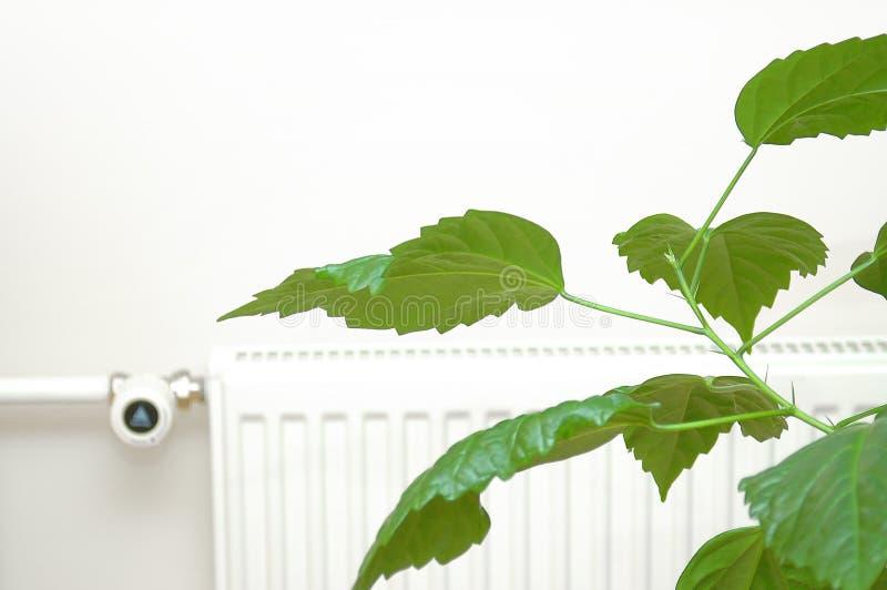 Download ενέργεια πράσινη στοκ εικόνα. εικόνα από φυτό, radiator - 51267
