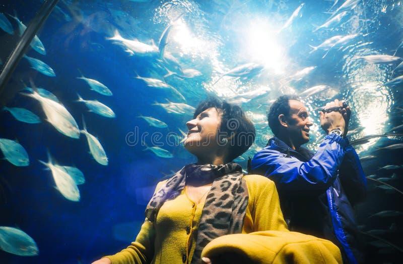 Ενήλικοι τουρίστες ανδρών και γυναικών που προσέχουν τα ψάρια στη σήραγγα ενυδρείων στοκ εικόνα με δικαίωμα ελεύθερης χρήσης