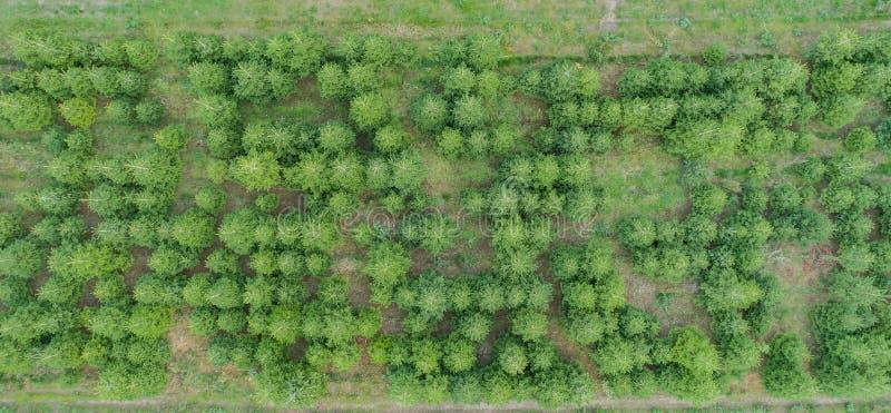 Εναέρια άποψη ενός μικτού δάσους στοκ φωτογραφία με δικαίωμα ελεύθερης χρήσης
