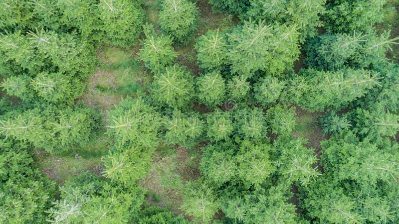 Εναέρια άποψη ενός μικτού δάσους στοκ φωτογραφία