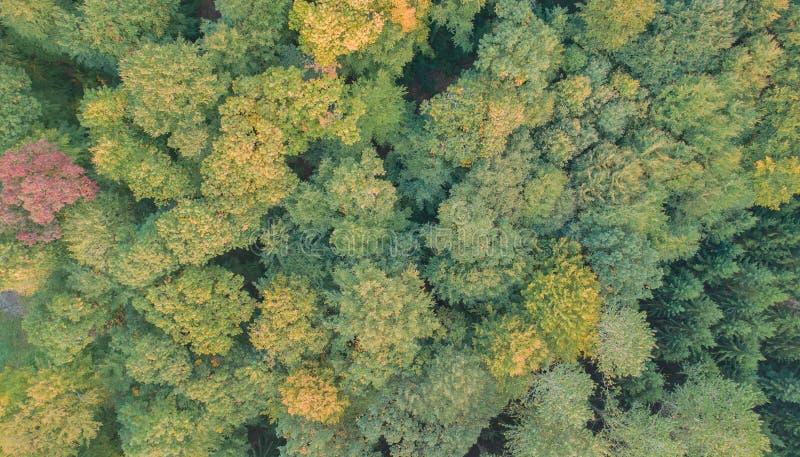 Εναέρια άποψη ενός μικτού δάσους στοκ εικόνα