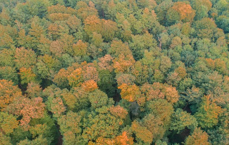 Εναέρια άποψη ενός μικτού δάσους στοκ εικόνες