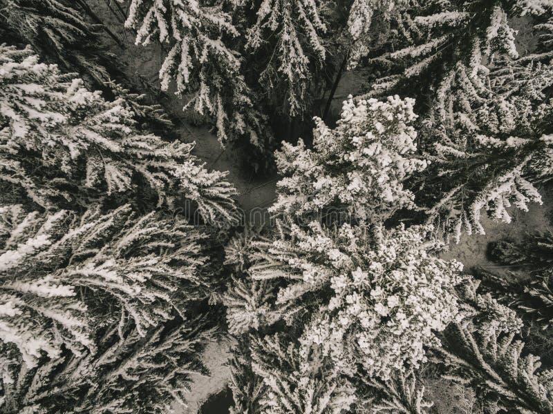 Εναέρια άποψη μιας δασικής χειμερινής δασικής σύστασης χειμερινών χιονισμένης πεύκων Εναέρια άποψη κηφήνων ενός χειμερινού τοπίου στοκ φωτογραφία με δικαίωμα ελεύθερης χρήσης