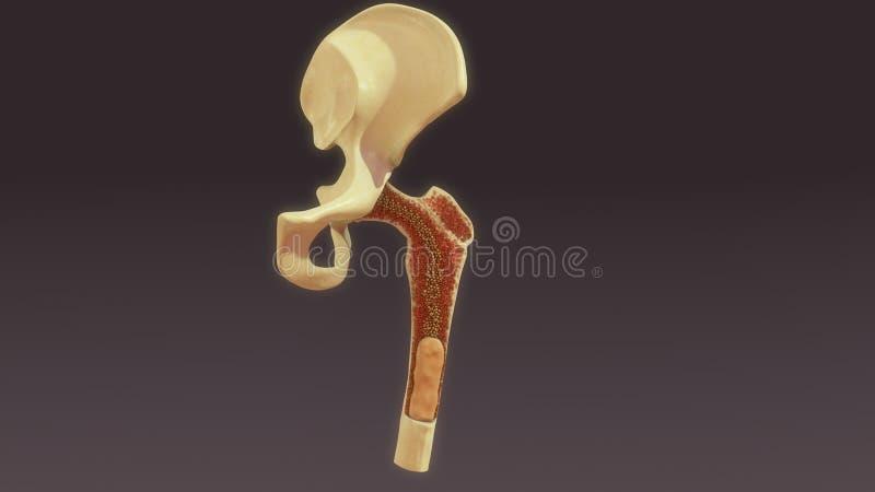 Εναέρια άποψη μυελών των οστών ελεύθερη απεικόνιση δικαιώματος