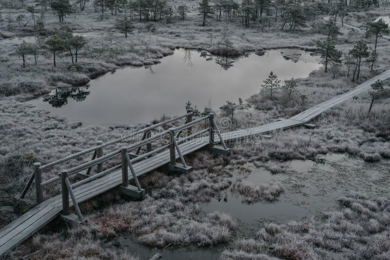 Εναέρια άποψη της ξύλινης πορείας, δρόμος στο έλος του στις αρχές χειμερινού πρωινού στοκ φωτογραφίες με δικαίωμα ελεύθερης χρήσης
