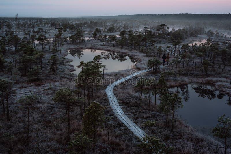 Εναέρια άποψη της ξύλινης πορείας, δρόμος στο έλος στοκ φωτογραφίες με δικαίωμα ελεύθερης χρήσης