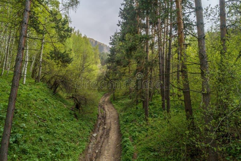 Εναέρια άποψη της οδήγησης αυτοκινήτων μέσω του δάσους στη εθνική οδό στοκ φωτογραφία με δικαίωμα ελεύθερης χρήσης