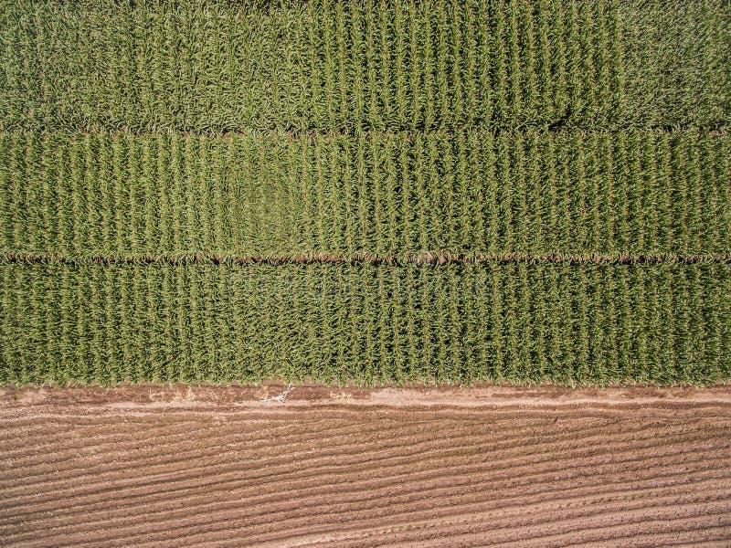 Εναέρια άποψη τομέων καλαμποκιού που σπέρνεται και που αυξάνεται στοκ εικόνες