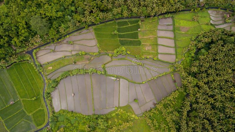 Εναέρια άποψη τομέων ρυζιού στοκ φωτογραφία