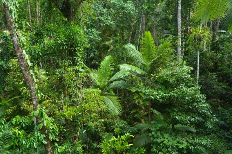 Εναέρια άποψη τοπίων του εθνικού πάρκου Queensland Austr Daintree στοκ φωτογραφίες με δικαίωμα ελεύθερης χρήσης
