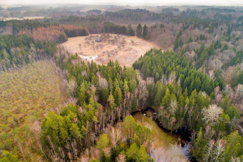Εναέρια άποψη του δάσους ελών στοκ εικόνα
