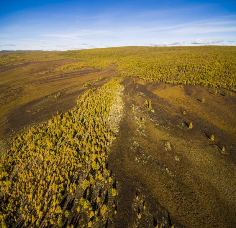 Εναέρια άποψη του δάσους στην Άπω Ανατολή, Ρωσία στοκ εικόνα με δικαίωμα ελεύθερης χρήσης