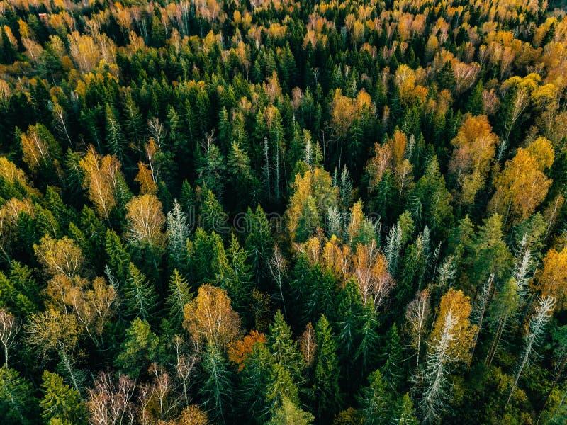 Εναέρια άποψη του δασικού τοπίου πτώσης φθινοπώρου με τα κόκκινα, κίτρινα και πράσινα δέντρα στοκ εικόνα με δικαίωμα ελεύθερης χρήσης
