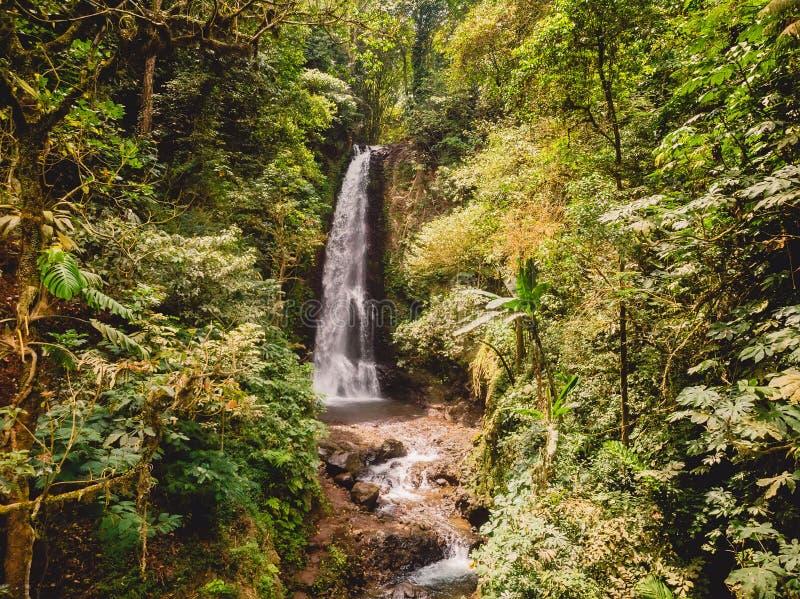 Εναέρια άποψη του καταπληκτικού καταρράκτη στη ζούγκλα με τις εξωτικές εγκαταστάσεις Μπαλί Ινδονησία στοκ φωτογραφίες