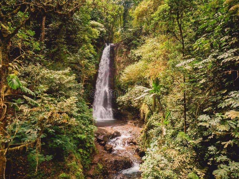 Εναέρια άποψη του καταρράκτη στη ζούγκλα με τις εξωτικές εγκαταστάσεις Μπαλί Ινδονησία στοκ φωτογραφίες