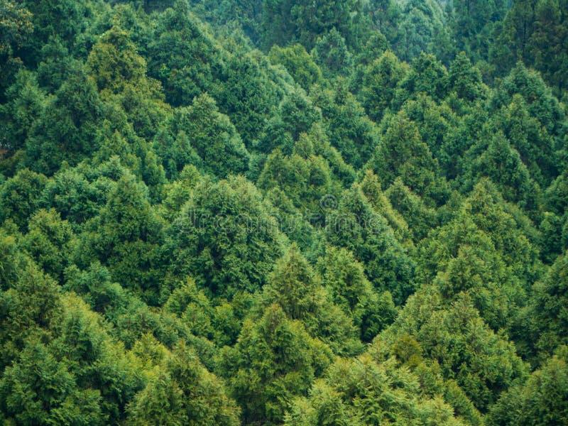 Εναέρια άποψη του πράσινου δάσους πεύκων στην Ταϊβάν από το τελεφερίκ τρόπων σχοινιών στοκ εικόνα