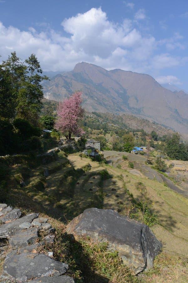 Εναέρια άποψη του χωριού και των πράσινων και ζωηρόχρωμων πεζουλιών τομέων ρυζιού, Νεπάλ στοκ φωτογραφία με δικαίωμα ελεύθερης χρήσης
