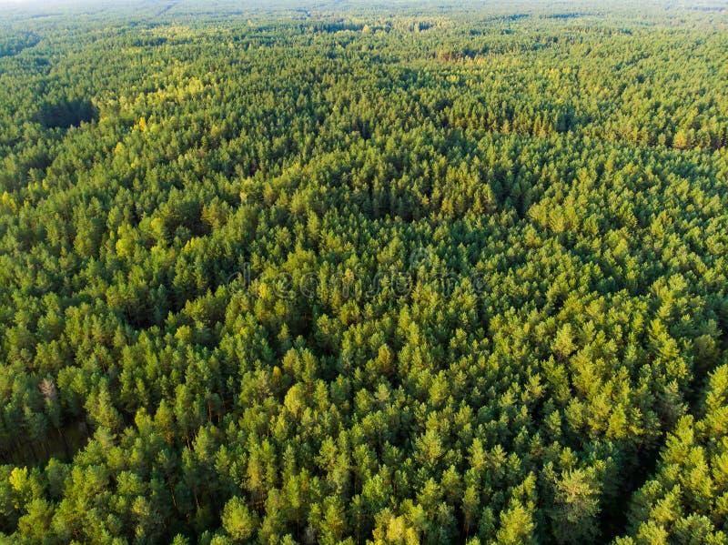 Εναέρια άποψη του όμορφου μικτού πεύκου και του αποβαλλόμενου δάσους στη Λιθουανία στοκ φωτογραφία με δικαίωμα ελεύθερης χρήσης