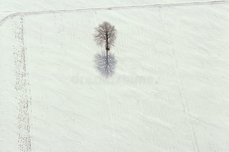 Εναέρια άποψη των δέντρων και των σκιών στο χιόνι στοκ εικόνες