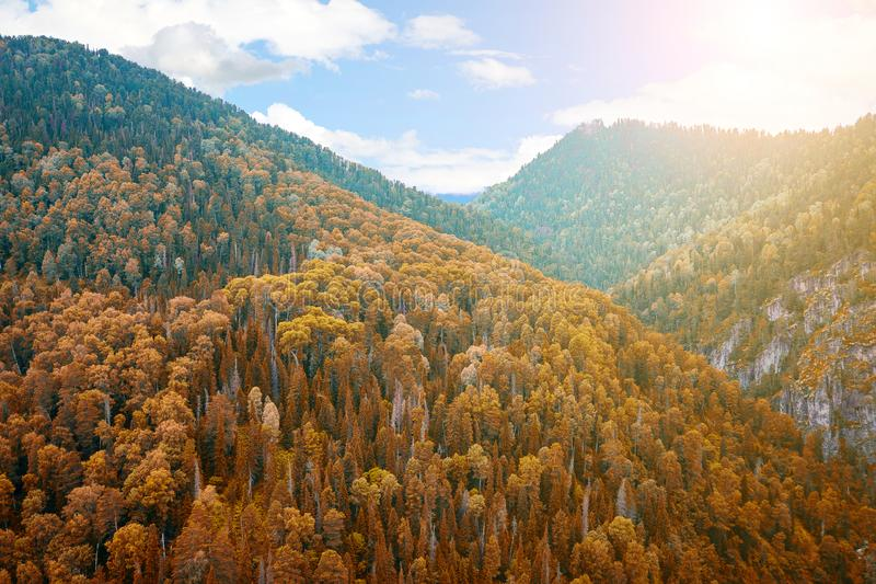 Εναέρια άποψη των βουνών με τα κίτρινα δέντρα θερμό σαφή σε έναν ηλιόλουστο στην ινδική θερινή ημέρα στα βουνά Altai Η φρεσκάδα στοκ εικόνα με δικαίωμα ελεύθερης χρήσης