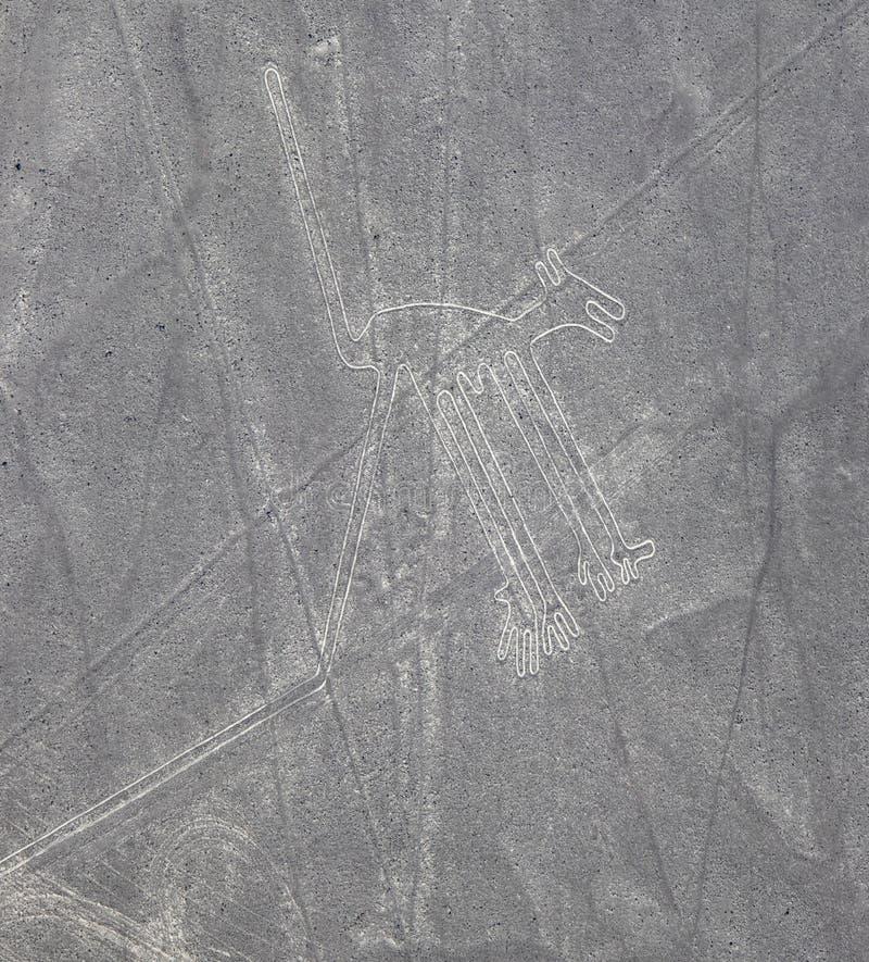 Εναέρια άποψη των γραμμών Nazca σκυλιών στοκ εικόνες
