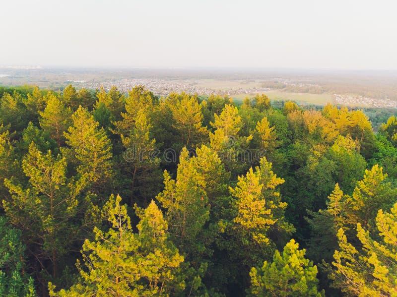 Εναέρια άποψη των κορυφών των δασών πεύκου στοκ εικόνες