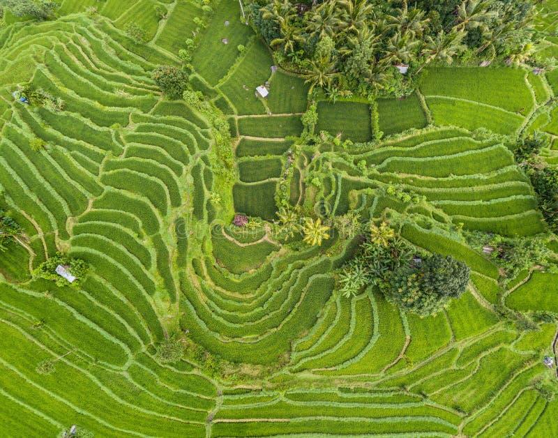 Εναέρια άποψη των πεζουλιών ρυζιού στο Μπαλί, Ινδονησία στοκ εικόνα