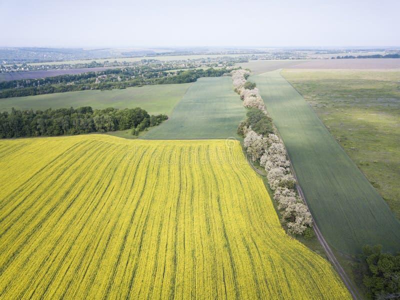 Εναέρια άποψη των τομέων πεζουλιών μουστάρδας στην άνοιξη στοκ εικόνες