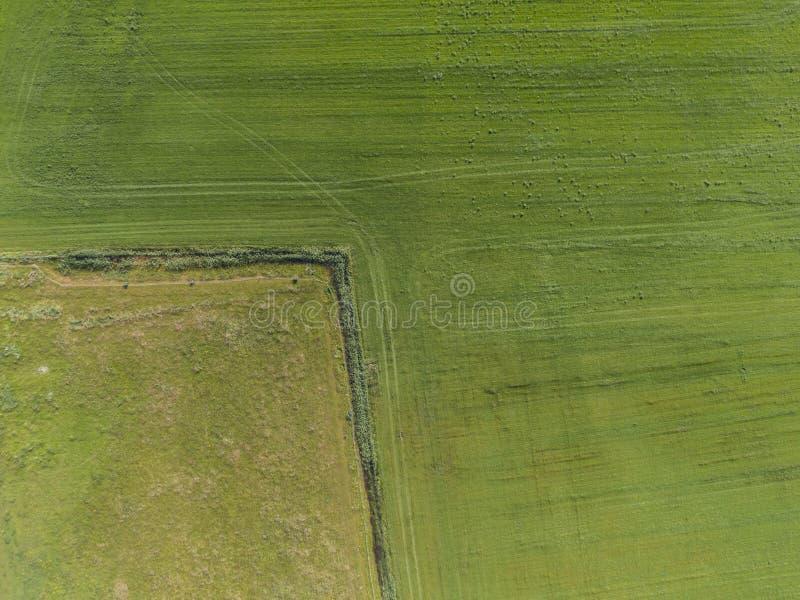 Εναέρια κορυφή κάτω από την άποψη δύο γεωργικών τομέων με τα διαφορετικά χρώματα και τις διαδρομές τρακτέρ στοκ εικόνα