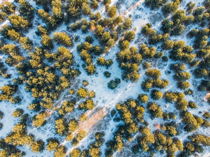 Εναέρια τοπ άποψη του δάσους χειμερινών πεύκων στο χιόνι στην ηλιόλουστη ημέρα στοκ εικόνες με δικαίωμα ελεύθερης χρήσης