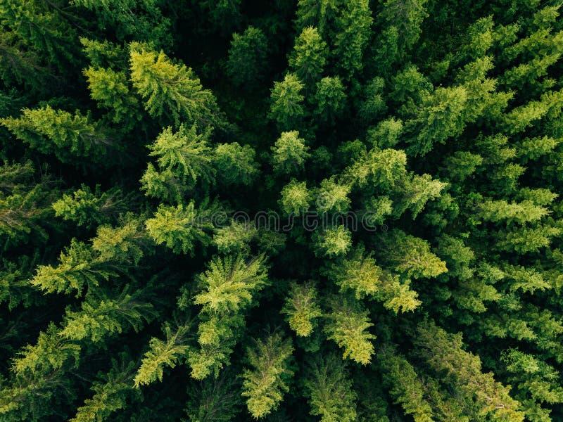 Εναέρια τοπ άποψη των θερινών πράσινων δέντρων στο δάσος στην αγροτική Φινλανδία στοκ φωτογραφία