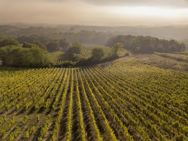 Εναέριος αμπελώνας του Μπορντώ άποψης στην ανατολή, Entre deux mers, Langoiran, Gironde στοκ φωτογραφίες