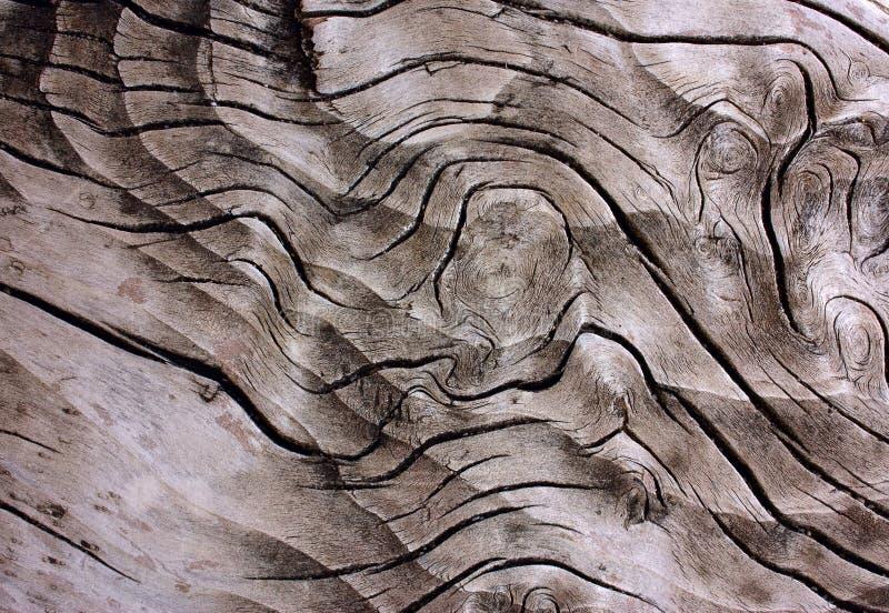 ενδιαφέρον παλαιό δάσος &sigm στοκ εικόνα