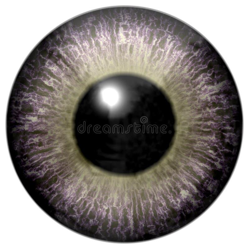 Ενδιαφέρων γκρίζος βολβός του ματιού με ανοικτό πράσινο στοκ εικόνα