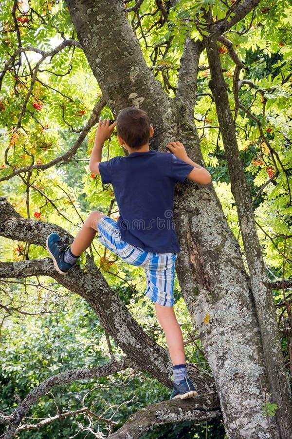 ενεργό παιδί κλάδων αγοριών που αναρριχείται στις δασικές αρσενικές νεολαίες δέντρων φύσης παίζοντας στοκ εικόνες με δικαίωμα ελεύθερης χρήσης