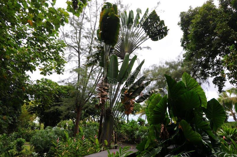 Ενθουσιώδης Ταϊτή στοκ εικόνα με δικαίωμα ελεύθερης χρήσης