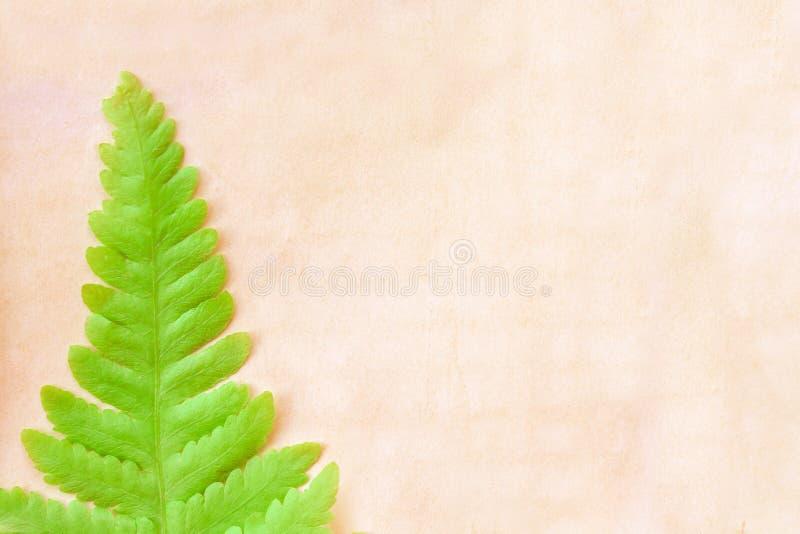 Ενιαία ζωηρόχρωμα πράσινα φύλλα φτερών στην παλαιά κενή καφετιά σύσταση εγγράφου grunge για το υπόβαθρο, διάστημα αντιγράφων στοκ εικόνα με δικαίωμα ελεύθερης χρήσης