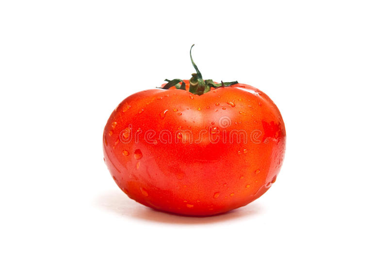 ενιαία ντομάτα στοκ φωτογραφία