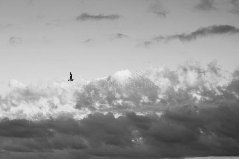Ενιαία seagull πετάγματος πλάγια όψη στο γραφικό νεφελώδη ουρανό στοκ φωτογραφία με δικαίωμα ελεύθερης χρήσης